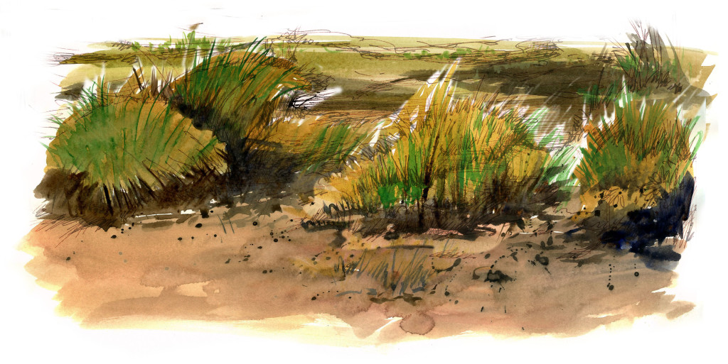 dunes watercolor
